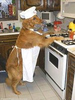 cooking dog.jpg